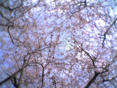 pruner_flor21