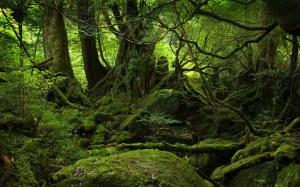 bosque_1